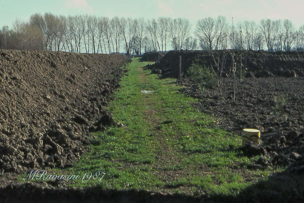 Ecco come si presentava il primo camminamento dell'oasi nel 1987. Unico punto rimasto intoccato del campo iniziale, anzi ne costituiva la carraia principale di penetrazione dalla casa-