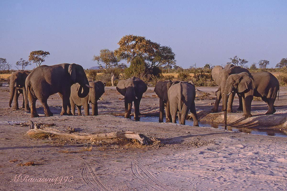 chobe-elefanti 1990