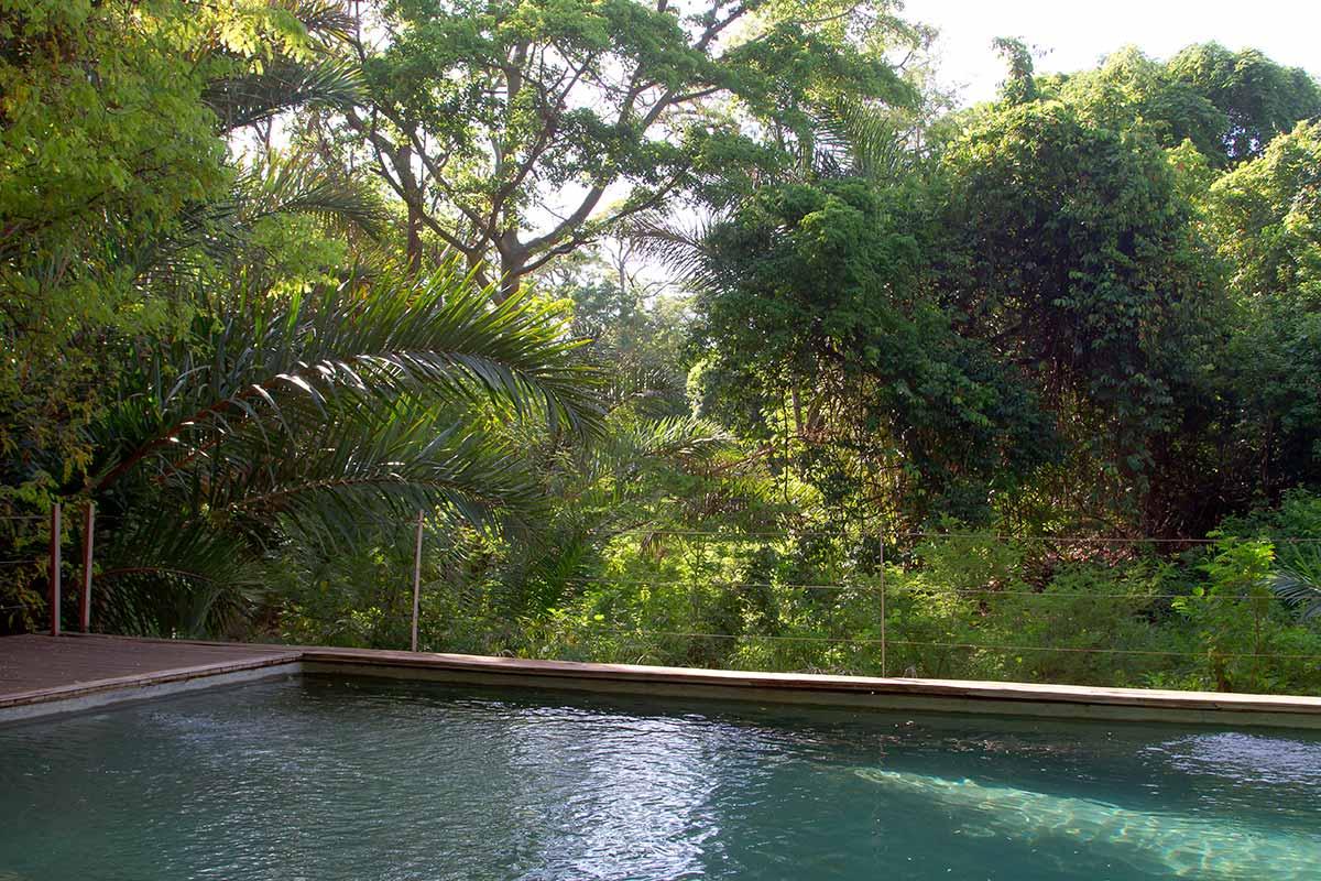 Il Sicomoro africano dalla piscina all'alba. Tratto di Riverine forest intatta.