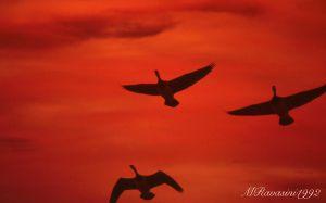 tramonto-con-Oche-facciabianca-Scozia-gen92.jpg
