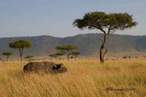 bufalo-panorama-.jpg