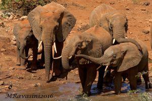 elefanti--2-IMG_5994.jpg