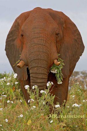 elefante-in-fiore-IMG_0004.jpg
