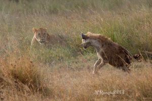 leonessa-e-iena-Masai-Mara-.jpg