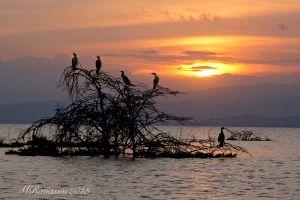 Tramonto-al-lago-Naivasha-Kenya.jpg