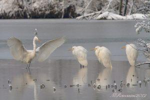 aironi-bianchi-e-neve-IMG_4118.jpg