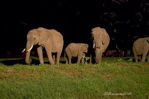 elefanti-in-notturna-Kenya.jpg