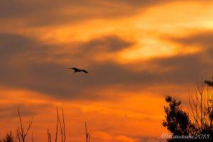 rientro-al-tramonto-.jpg