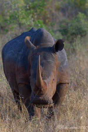 c30-rhino-IMG_1937.jpg