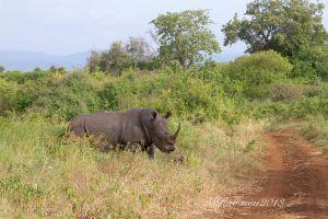 c39-rhino-IMG_2181.jpg